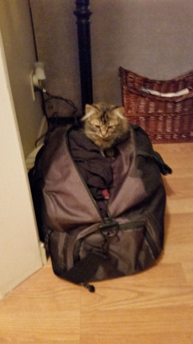 Olive wants to go with us xoxo